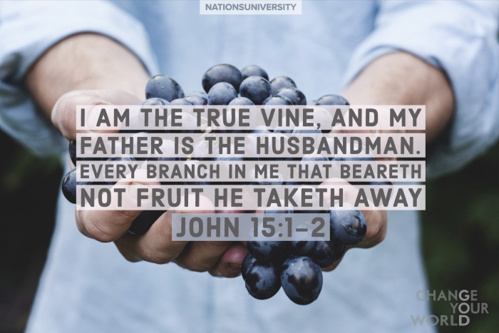Are You Bearing Fruit?