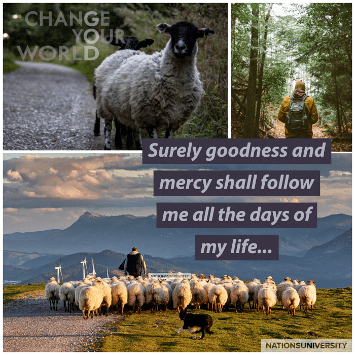 Weekly Reflection –  The Lord Is My Shepherd