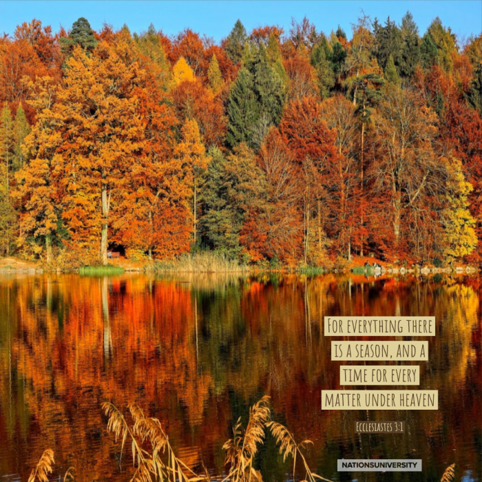 Weekly Reflection – Brilliant Autumn Leaves