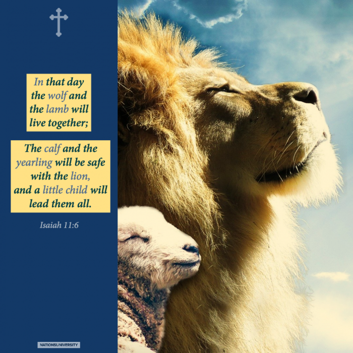 Weekly Reflection – The Lion and The Lamb